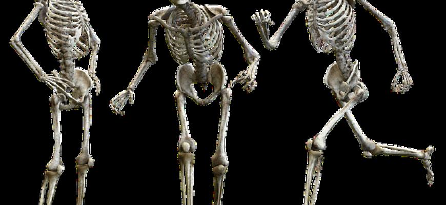 תקופת אנטומיה