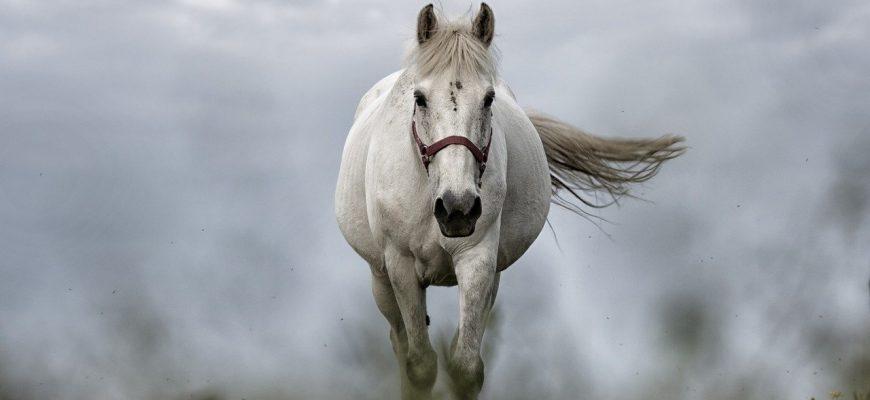 האבּיר על הסוס הלבן